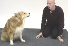 Watch How Dogs React To A Human Barking (Hint: It's Adorable)