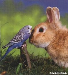 Piep piep, willst du mein Freund sein? ☺