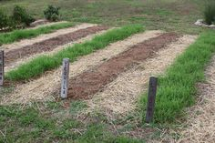 How To Plant A Green Manure Crop This Spring To Recharge Your Garden Soil!