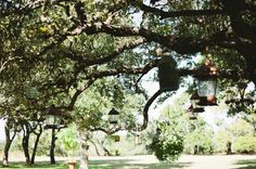 outdoor lamps hanging grom huge oak trees at vista west ranch  #rustic #wedding #vintage #texas #hillcountry