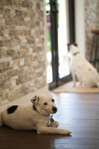 6 Decorating Tips For A Pet Friendly Home Pets Pampered Puppies Jack Russell