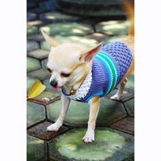 Blue Turquoise XXS Dog Clothes Handmade Crochet Cotton by myknitt