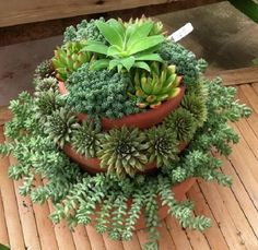 tiered succulent containers