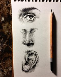 ' Ears, Eyes & Noses.' Learn more at Instagram.com ~ Wendy Schultz ~ Drawing & Sketching.