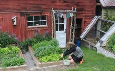 Carrie tends to the abundance of home-grown greens, future baby food for baby-on-the-way.