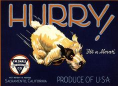 Sacramento Hurry! Terrier Dog Pear Crate Label Art Print