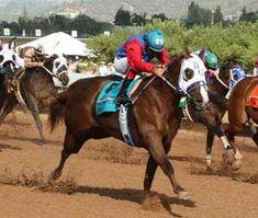 Ochoa, 2011 All American Futurity. Running Horses, My Cousin, Horse Racing, Quarter Horses, American, Animals, Diamond, Horses, Animaux