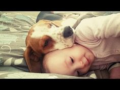 Dog loves his small human: dogs are family - YouTube