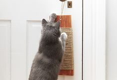 3 DIY Cat Toys — P&G everyday | Home & Garden | P&G Everyday