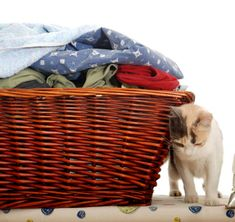 How to Get Cat Urine Smell Out of Clothes