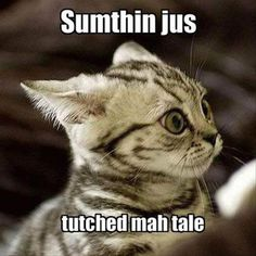Someting touched my tail, funny animals