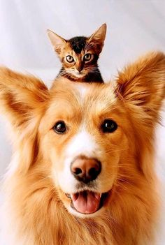 Silly Dogs, Cute Funny Dogs, Cute Cats, Cute Animal Photos, Animal Pictures, Beautiful Cats, Animals Beautiful, Cute Baby Animals, Animals And Pets