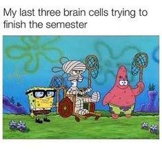 School Memes Funniest Spongebob Memes of October 2018 - Spongebob, Patrick and Squidward Funn. Funniest Spongebob Memes of October 2018 - Lustige Memes von Spongebob, Patrick und Thaddäus Funny Spongebob Memes, Funny School Memes, Crazy Funny Memes, Cartoon Memes, School Humor, Really Funny Memes, Stupid Funny Memes, Funny Relatable Memes, Funny Tweets