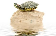 How to Inexpensively Build an Outdoor Habitat for Red Slider Turtles. Housing red slider turtles can be quite costly. This is especially true if your … Tortoise Cage, Tortoise Habitat, Turtle Habitat, Baby Tortoise, Giant Tortoise, Turtle Care, Pet Turtle, Red Eared Slider Turtle, Aquatic Turtles