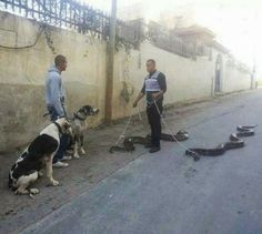 Just Taking My Snakes for a Walk - Nice Dogs - Biggest Snakes in the World ---- best hilarious jokes funny pictures walmart humor fail Animal Memes, Funny Animals, Cute Animals, Funny Cute, The Funny, Funny Man, Haha, Tier Fotos, Just For Laughs