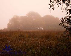 Foggy Marsh off James Island  signed matted by CharminglyDixie, $30.00