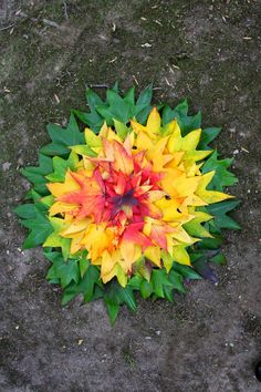 The Calvert Canvas: Adventures in Middle School Art!: After Andy Goldsworthy