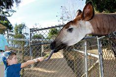 A Visit to the San Diego Zoo Safari Park  #familytravel #travel #california
