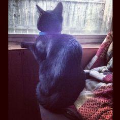 He loves my windows :) #black #cat # kitten #kitty #babyboy #blackcat #blackkitty #blackkitten #yelloweyes