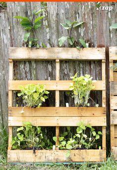 Antes de escolher as plantas do jardim verifique quais espécies podem viver em áreas ensolaradas.