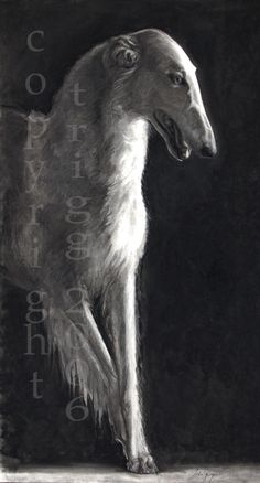 En Pointe(Borzoi) #dogs.  Grey with hair.