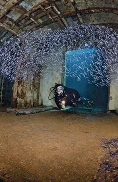 Un pecio lleno de vida, cambia su función. El USS Kittiwake  www.flowcheck.es Taller de equipos de buceo #buceo #scuba #dive