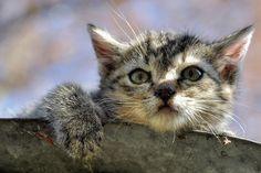 Free photo: Cat, Animal, Pet, Eyes, Resting Cat - Free Image on Pixabay - 1186532