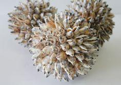 Seashell Balls - Set of 3  (http://www.caseashells.com/seashell-balls-set-of-3/)
