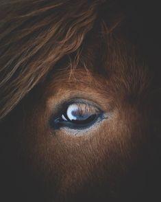 "8,898 gilla-markeringar, 177 kommentarer - GUNNAR FREYR (@icelandic_explorer) på Instagram: ""I really got a thing for these blue eyed beauties. #iceland #horsesoficeland"""