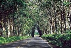 """This is the road we take to get to church.  Even more breathtaking in person.  """"Tunnel of trees"""" in Poipu."""
