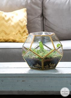 Gold Polygon Fern Terrarium