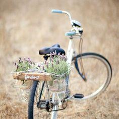 leisurely bike rides