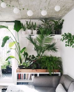 mid century modern bohemian grey and white living room decor houseplants indoor jungle fairy lights Interior Plants, Interior And Exterior, Botanical Interior, Botanical Decor, Interior Walls, Plantas Indoor, Estilo Tropical, Tropical Vibes, Deco Nature