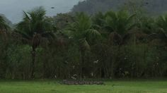 Famiglia Libardoni: Encontro Xerém, RJ, Brasil. Pombos 02. IMG_8545. 131...