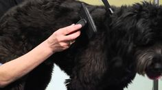 How to Help Take Care of Your Dogs & Puppies : Dog Grooming Tips