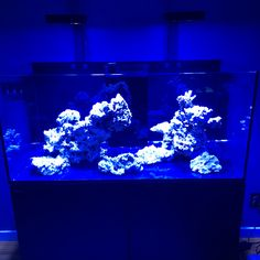 RedSea Reefer 425xl scape with blues up. DWW