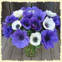 California Organic Flowers - great prices!