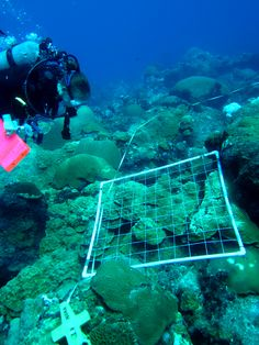 Image result for underwater coral research
