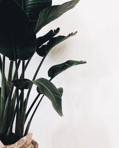 pinterest || sarahesilvester