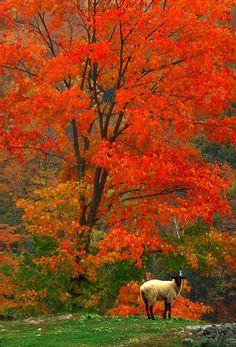 Fairlee,Vermont
