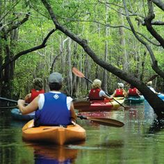 A great article from Atlanta Magazine about a fabulous Gulf County day trip to Apalachicola. Florida Vacation, Florida Travel, Apalachicola Florida, Saint George Island, Going Fishing, Canoe, State Parks, Kayaking, Places To Go