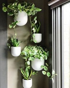 Wallscape Planter, White, at West Elm - Home Decor - Planters & Terrariums - Indoor Floral Beautiful hanging indoor plant idea. Wall Mounted Planters Indoor, Succulent Hanging Planter, Ceramic Wall Planters, Succulent Wall Art, Indoor Planters, Plant Wall, Hanging Planters, Indoor Garden, Outdoor Wall Art