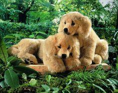 """Sunny"" Golden Retriever Puppy"
