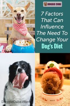 Changing your dog's food is not an easy decision to make as it can cause problems for your dog. When do you need to change your dog's diet? Here're 7 factors that can influence that decision. Dog Diet, No Cook Meals, Factors, You Changed, Dog Food Recipes, Your Dog, Cube, Puppies, Canning