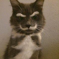 Суровый котейка