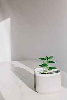 Some house plants thrive in low light environments while other require plenty of sun in order to photosynthesis. Determining the level of light will help in selecting your plants. Photosynthesis, Growing Herbs, Low Lights, Rooftop, House Plants, Balcony, Planter Pots, Sun, Rooftops