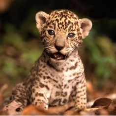 Most Exotic Animals   World's Most Exotic Pets   deCHIVE