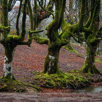 España alberga una naturaleza inusual, desconocida y atípica que tiene que ser descubierta. Lugares cargados de belleza, donde se mimetizan las leyendas y toda clase de misterios formando parte de la cultura más arraigada del país. Hemos acabado embrujados por los encantos de estos frondosos bosques, algunos de los rincones más inquietantes de España, envueltos en un halo de misticismo, brujería y cargado de leyenda.