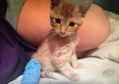 A picture of my cat simba in a cast when he broke his leg.