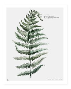 Urban botanic // 4 Plates Signed - Google zoeken